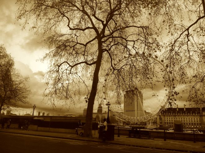 London tree sepia.jpeg