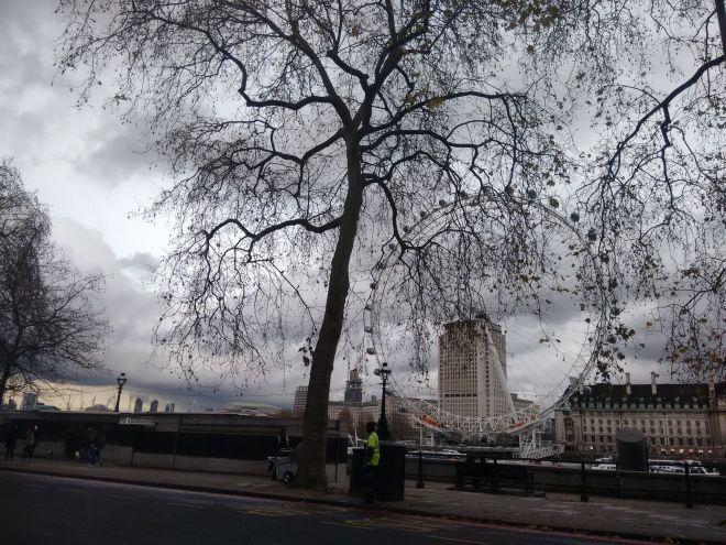London tree