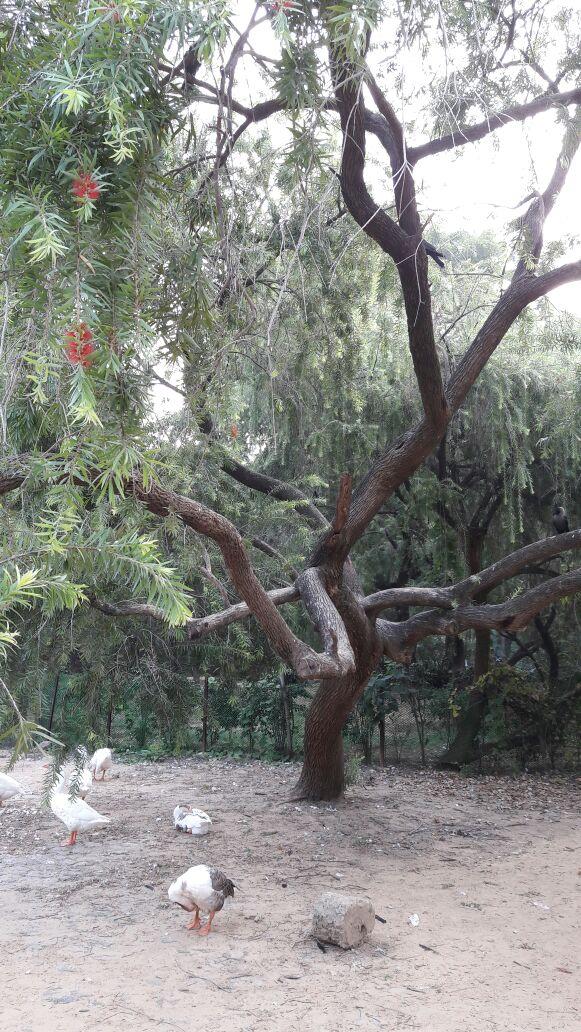 tree-253