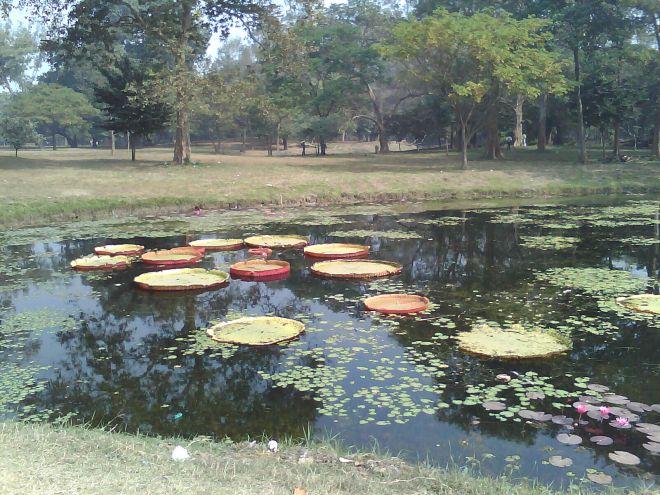 botanics2