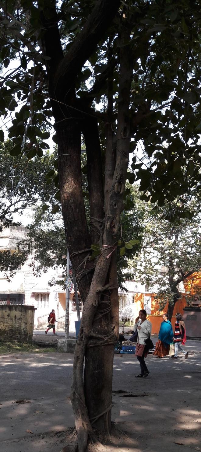 roping-tree