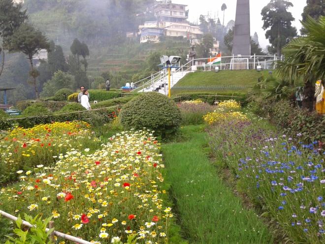 Darjeeling fl
