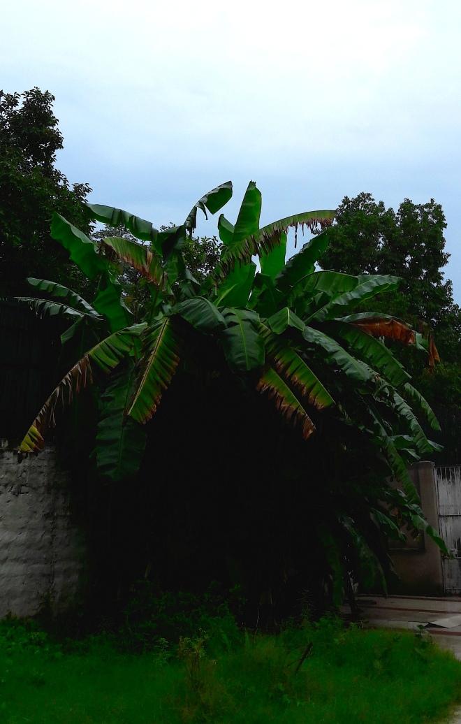 Bantree