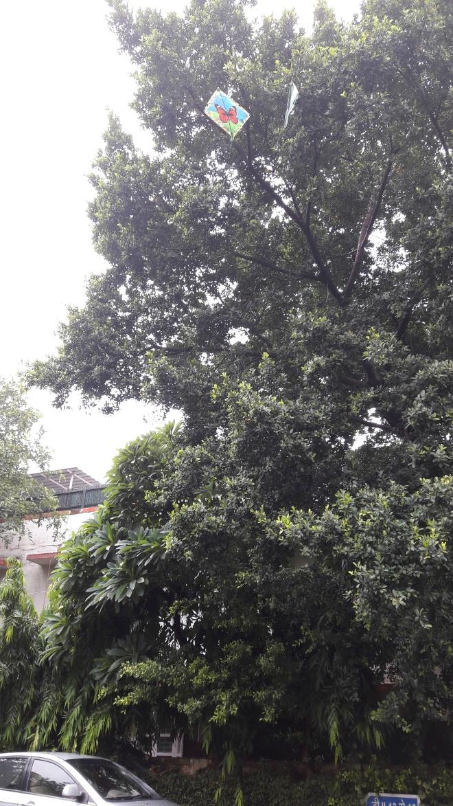Bfly tree