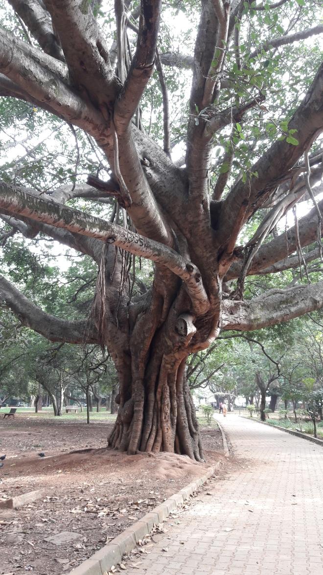 Wtree