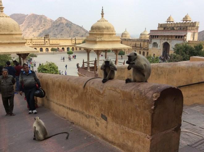 Jaipur1